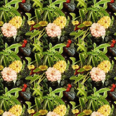 harvest by Jenny Knuth