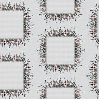 grasses by Jenny Knuth